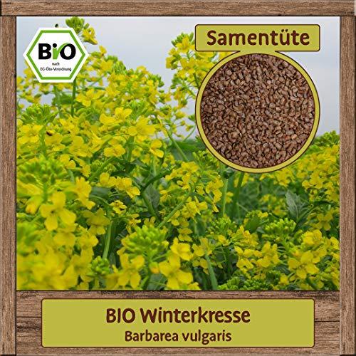Samenliebe 40 verschiedene Sorten Kräuter-Samen - Große Auswahl & viele Sorten - Saatgut zum Pflanzen, Sorte:BIO Winterkresse