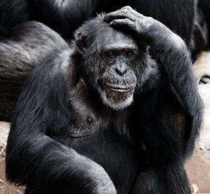 Affe Unbekannte Wirkungsweise