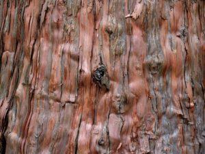 Zedernholz Zeder Duft Öl Aroma