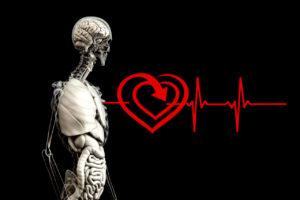 Herz Rhythmus