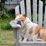 Müdigkeit & Erschöpfung: Ursachen verstehen & Gegenmittel ergreifen