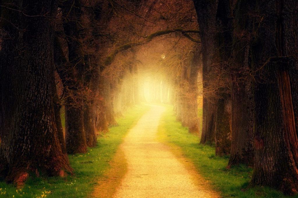 Waldweg Allee