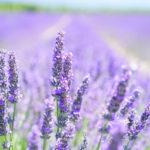 Düfte & ätherische Öle: Für mehr Ausgeglichenheit & Harmonie