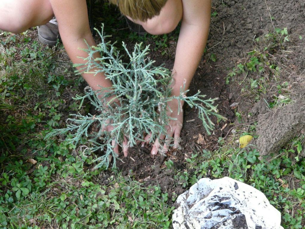 Baum pflanzen Gärtnern