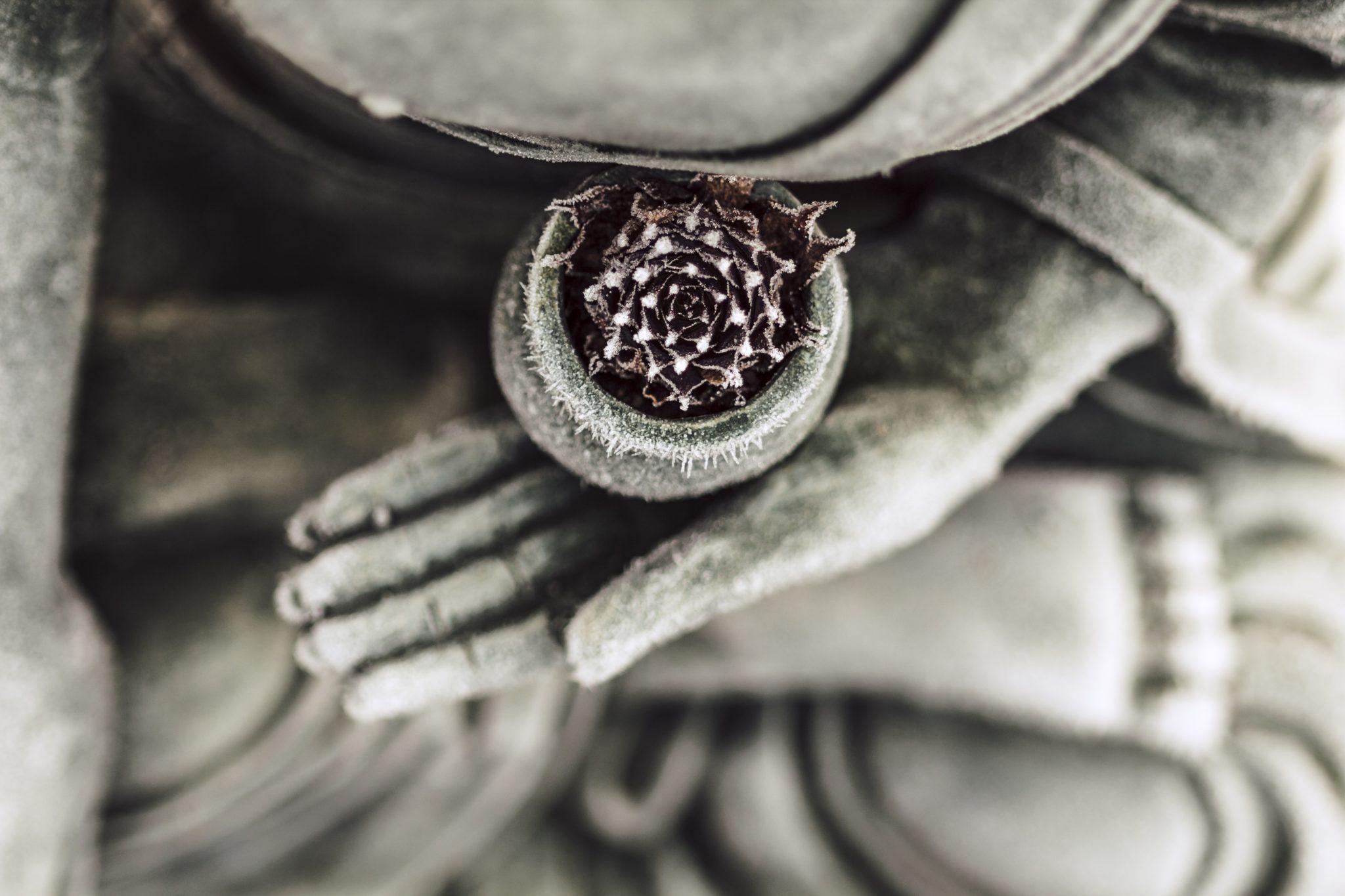 Buddhas Geschenk