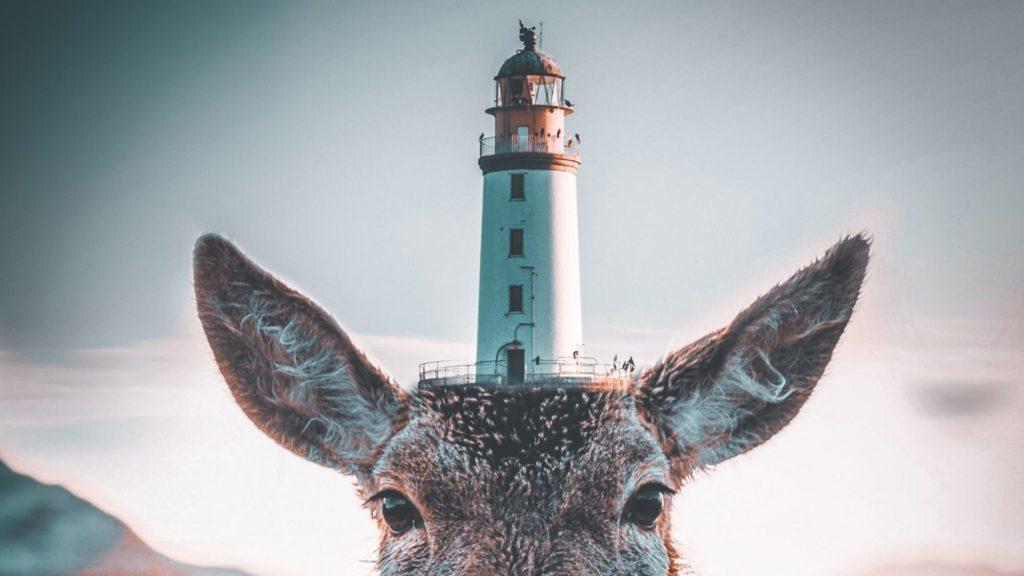 Leuchtturm auf dem Kopf eines Tieres.
